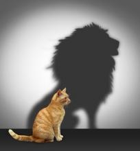 reflectie_schaduw_kat_leeuw_motivatie_zelfvertrouwen_zelfbeeld_verkleind_web